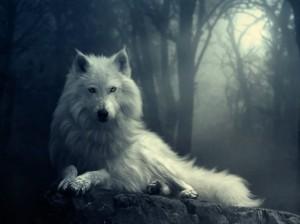 wolf-yorkshire_rose-