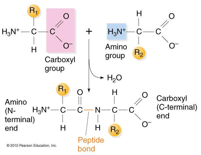 ionic bonds | Biochemistry3rst