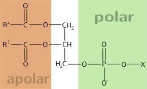 Apolar, Polar