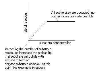 effect of enzyme catalase concentration on Introduction: in this experiment, i am going to determine the effect of different concentration of enzyme catalase on the rate of reaction of.